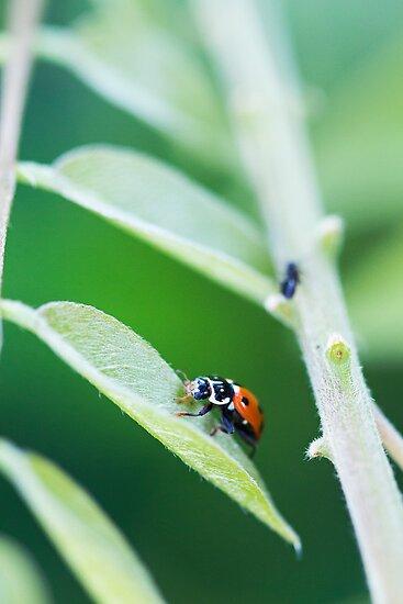 Spots In The Green II by Josie Eldred