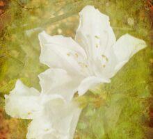 White Azalea by designingjudy