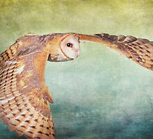 Barn Owl In Flight by cesstrelle