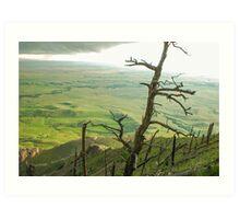Stormy Tree Art Print