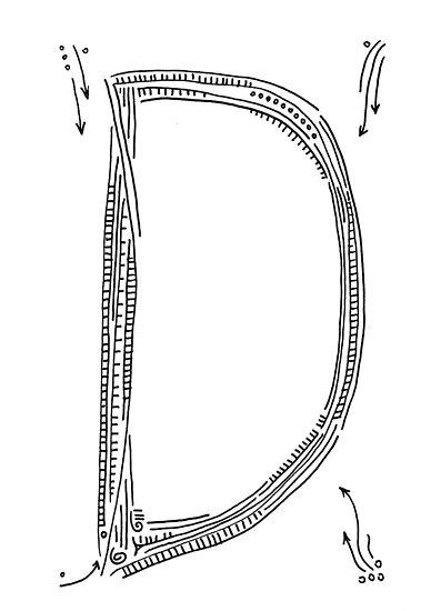 The letter D by handandi