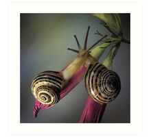 Snails in love Art Print