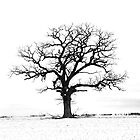 Lone tree by danforth