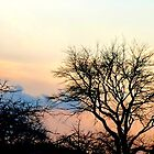 Sunset tree silhouettes by The Creative Minds