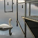 Swan on Loch Lomond 2 by jojobob