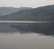 Distant view of a white goose swimming peacefully in the morning in Loch Ness in Scotland by ashishagarwal74