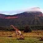 Giraffe II, Entabeni Lodge, South Africa by Ludwig Wagner