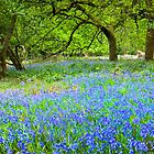 Spring in The Cotswolds by vivsworld