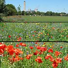 Poppy Day Didcot  by SLoD