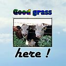 GOOD GRASS HERE by Jon de Graaff