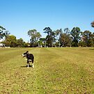 Jesse - Happy Aussie Dog - What Does She See? by Robert Phillips
