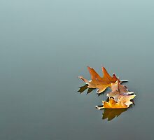 Autumn Leaf by doorn