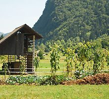 Wood Storage Building & Veg Garden by jojobob
