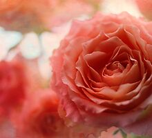 roses are . . . .  by Teresa Pople