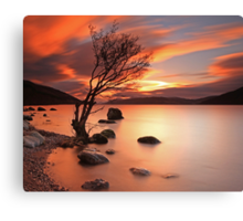 Lone Tree at Sunset. Canvas Print