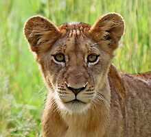 I am an inquisitive cub of the sparta pride by jozi1