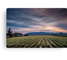 Spring Arrival Canvas Print
