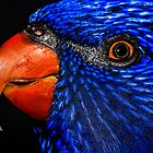 Rainbow Lorikeet (head shot) by Cordell Richardson