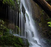 Pencil Pine Falls - Cradle Mountain National Park by Steve Bass