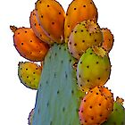 Cactus Apples by John Butler