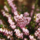 Pink Heather Detail by jojobob