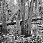 Roots by scrinjun