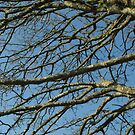 sky branches by millymuso
