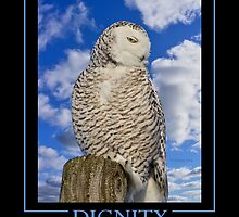 Dignity by Heather King