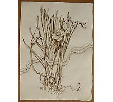 Narcissus and Echo - Walnut Ink Photographic Print