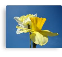 Spring Blue Sky art prints Yellow Daffodils Flowers Canvas Print