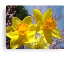 Orange Yellow Daffodil Flowers art prints Spring Canvas Print