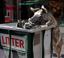 Rundle Mall - Rundle Mall Pig and Litter Bin by DPalmer