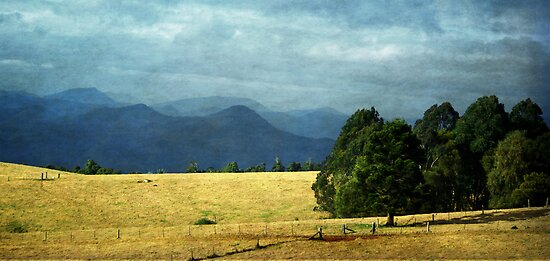 Autumn light in Dorrigo NSW by Clare Colins