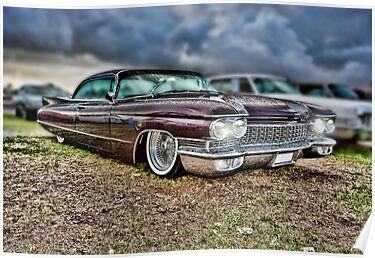 Caddy by Shane Walker Photography