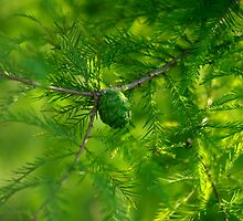 Restful Evergreen Branches and Fruit by Arteffecting