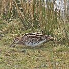 Snipe by dilouise