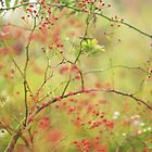Misty Morning Red Rosehips by Arteffecting