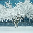 White Snow Covered Tree and Blue by Arteffecting