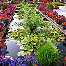 Butchart Gardens/Canada by Nancy Richard