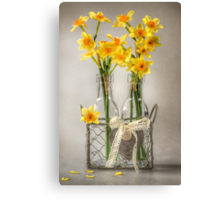 Mini Daffs Canvas Print