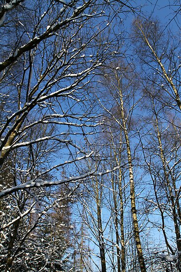 Winter Forest by Jens Helmstedt