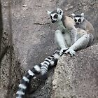 Mother & baby Ringtailed Lemur - Madagascar by CharlotteMorse