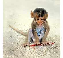 Young macaca Photographic Print