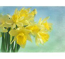spring cheerfulness Photographic Print