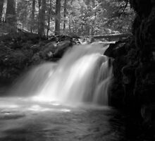 Whitehorse Falls - Umpqua National Forest by Harry Snowden