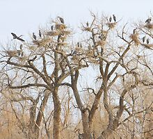 Thats A Lot Of Heron  by Bo Insogna