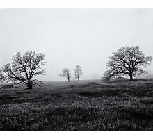 Morning Fog Paradise California 1985 Photographic Print