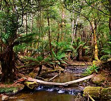 Fern Glade at Russell Falls by Chris  Randall