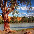 The River Murray - Swan Reach, South Australia by Mark Richards