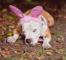 Still Not A Happy Bunny! by Zdogs